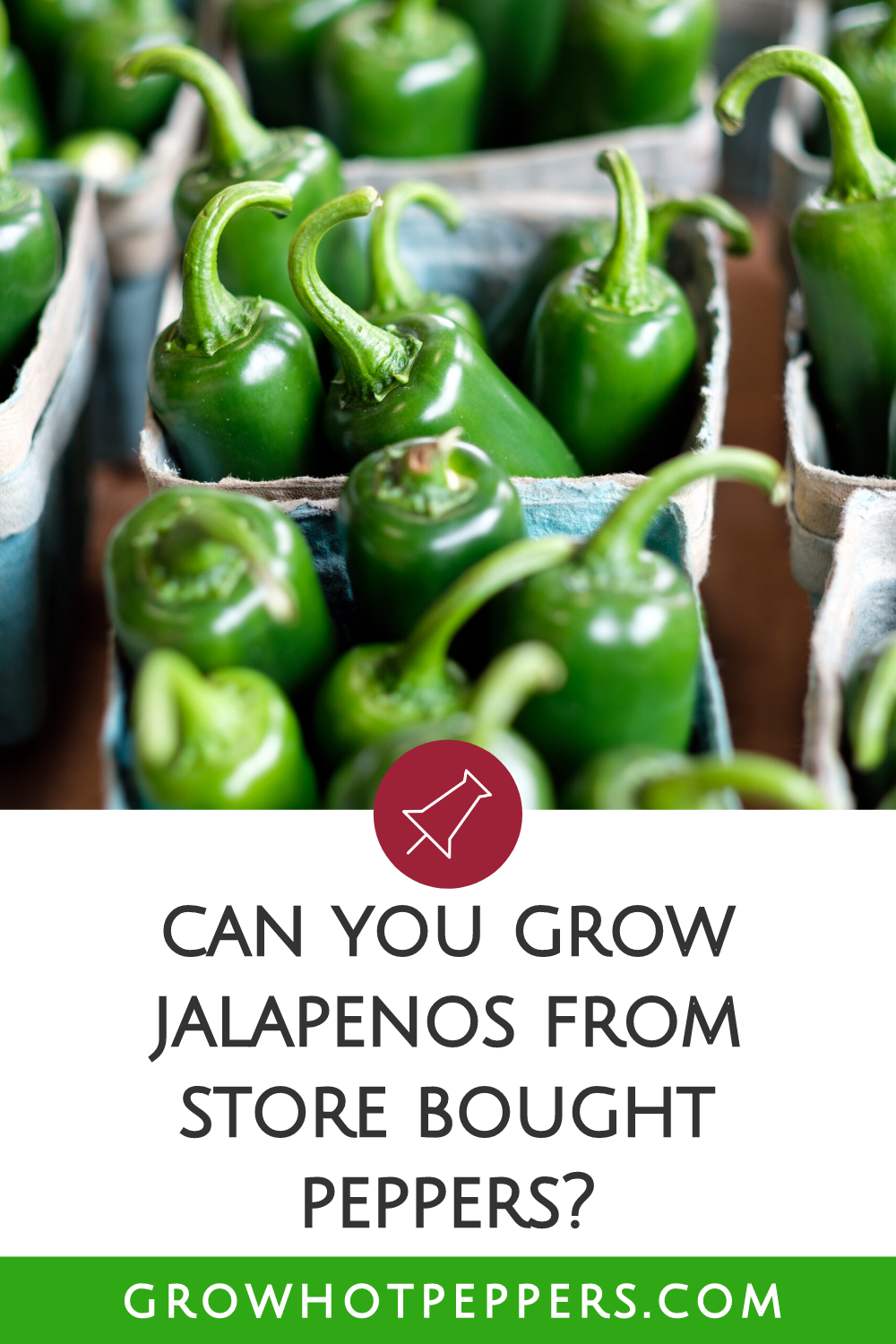 Jalapeno Seeds: Can You Grow Jalapenos from Store Bought Peppers?