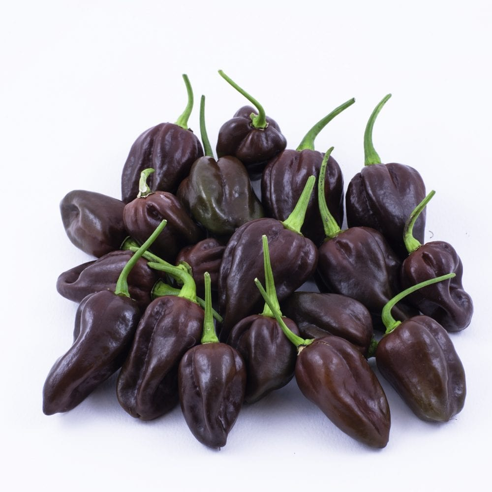 Chocolate Habanero Peppers: A Great Source Of Capsaicin