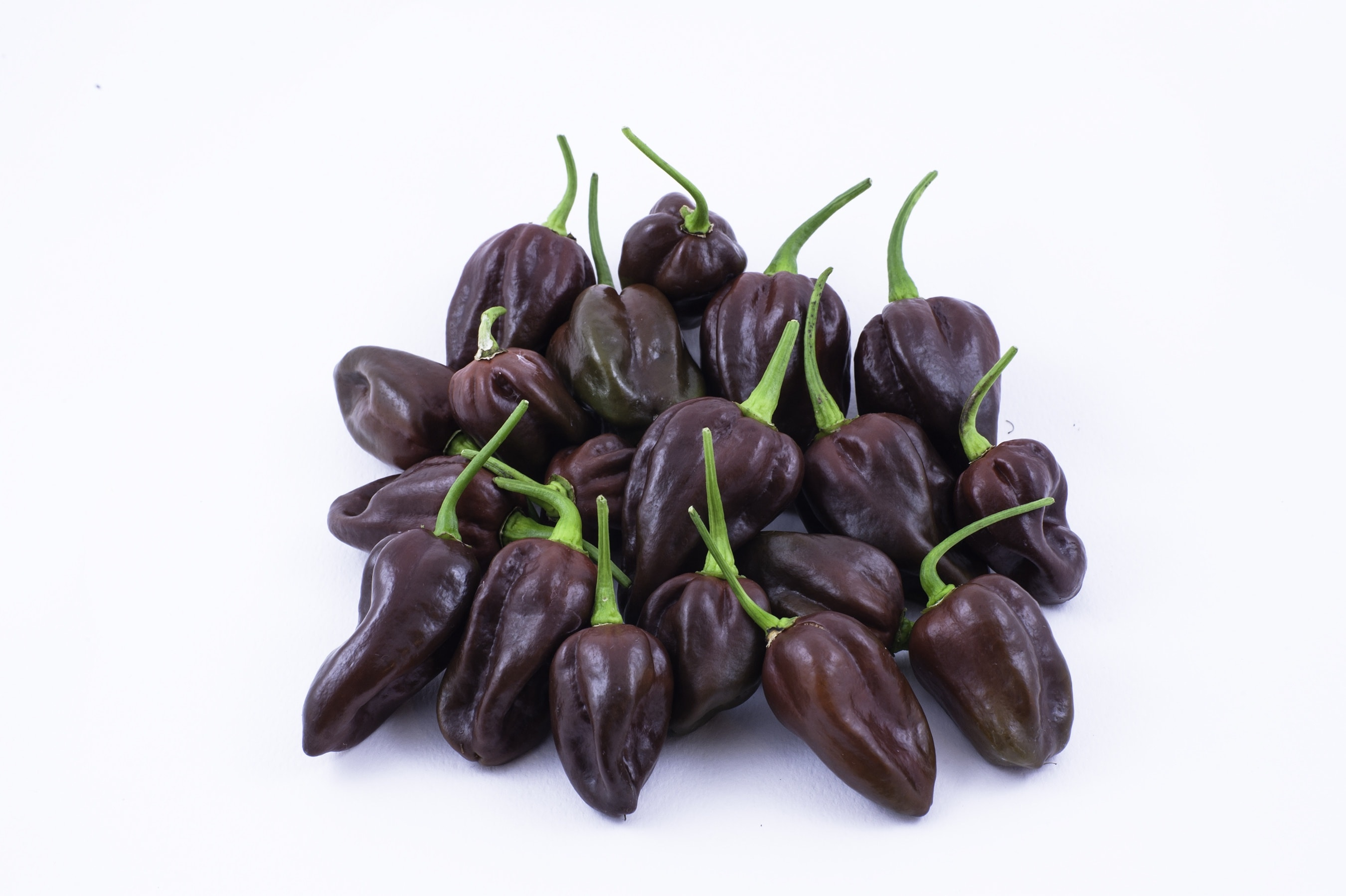 chocolate habanero peppers