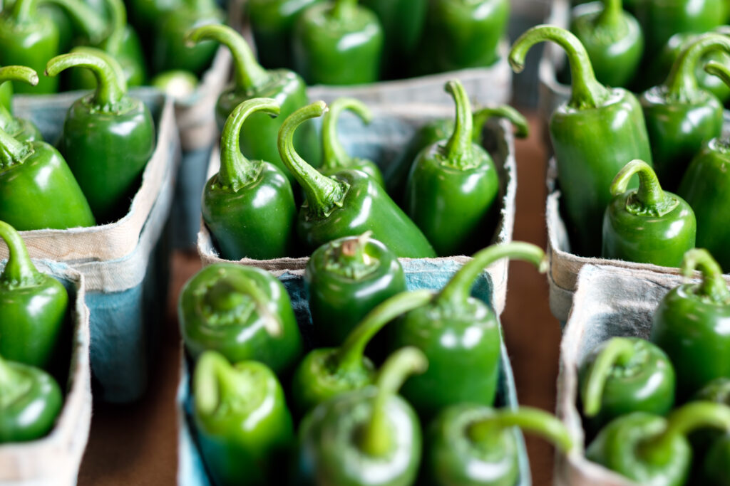can you grow jalapenos from store bought peppers