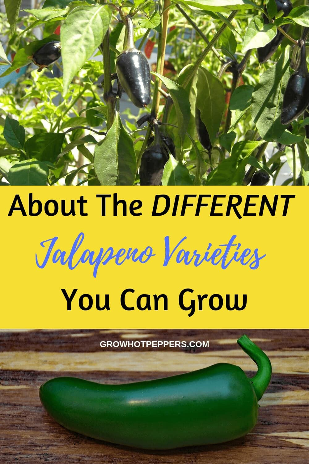 Jalapeno Pepper Varieties: Which One Will You Grow?