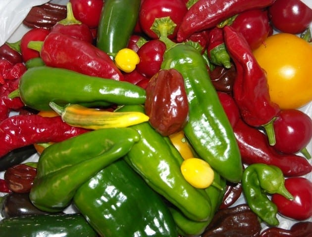 An assortment of chile peppers including Spanish Padron, Piment d'Espelette, Yucatan White Habanero and Cherry Bomb