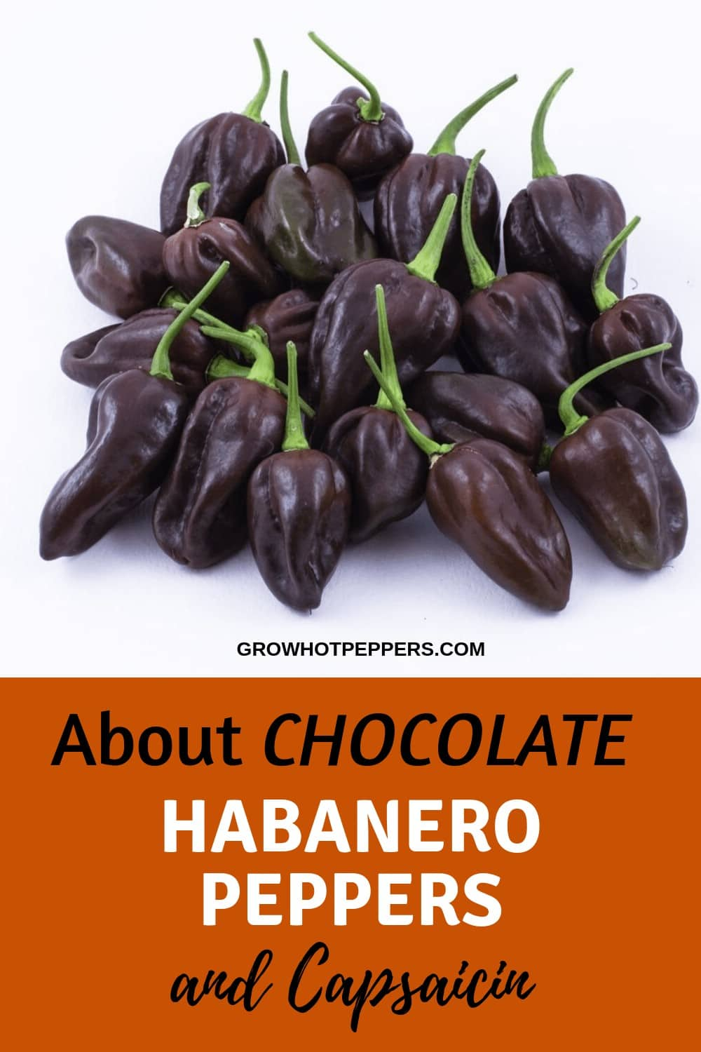 Chocolate Habanero: About This Awesome Pepper (+ Growing Tips)