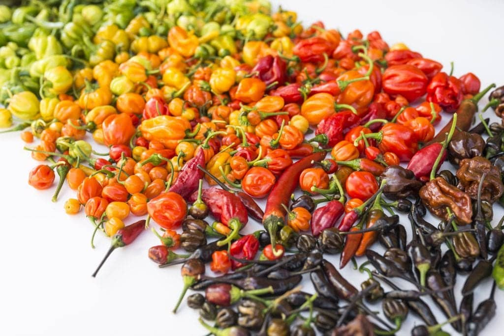 hottest peppers in the world