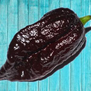 Chocolate Bhutlah: Is it Hotter Than the Carolina Reaper?