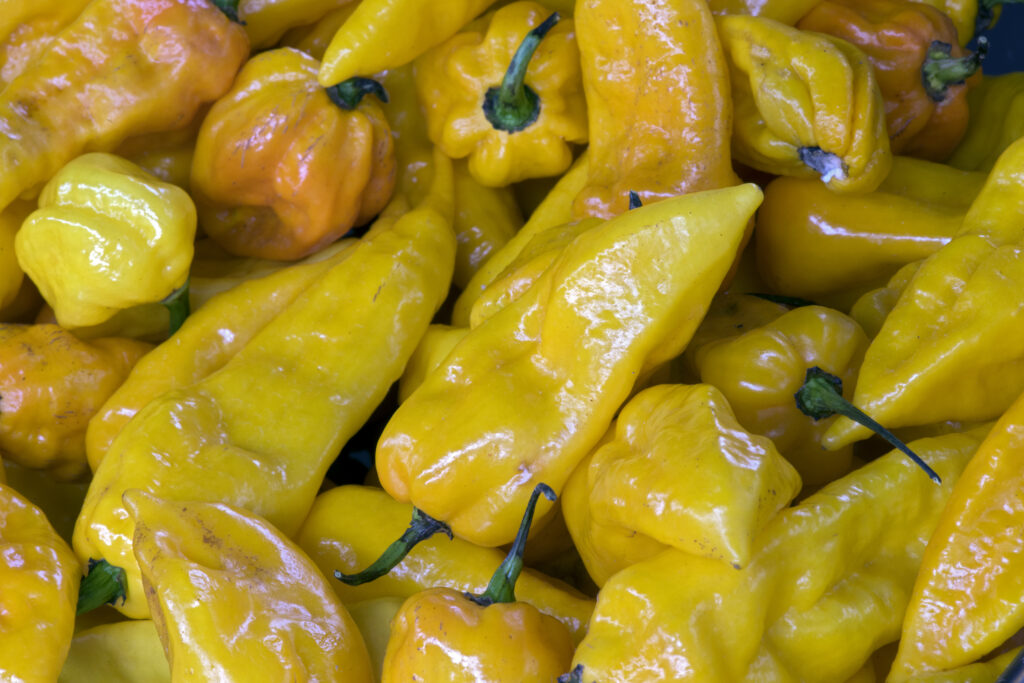 yellow ghost peppers