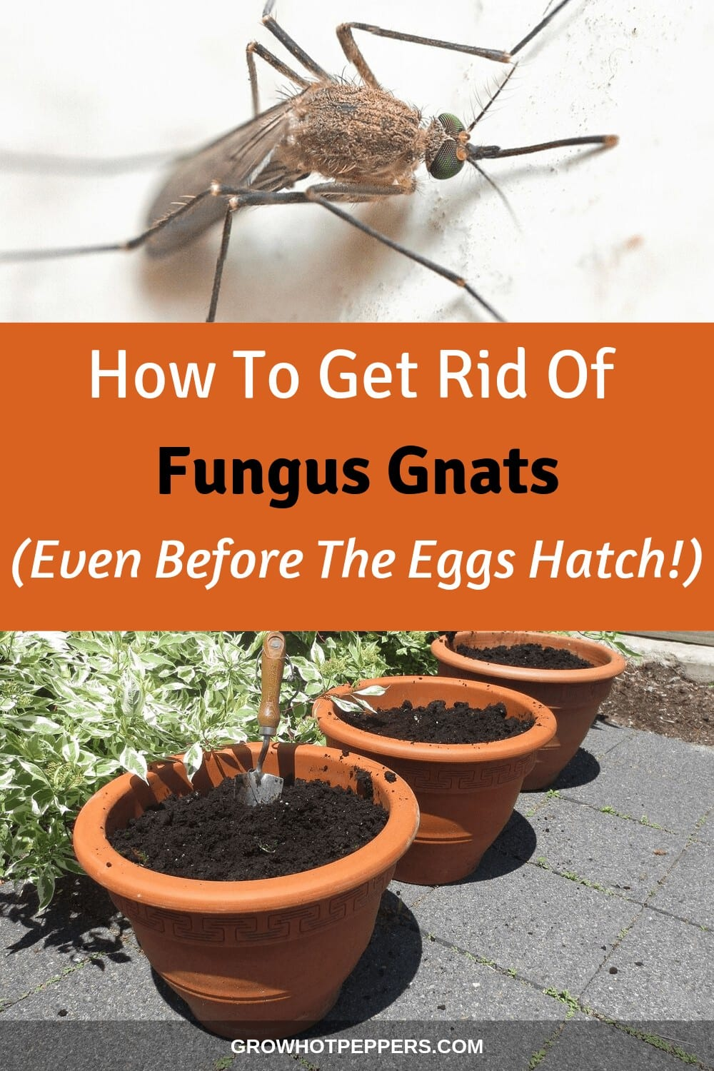 How to Get Rid of Fungus Gnats on Indoor & Outdoor Plants