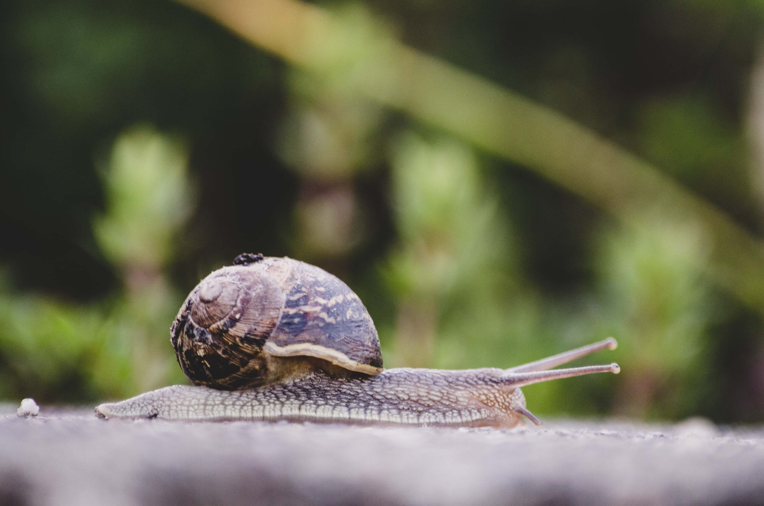 snail against blurred background