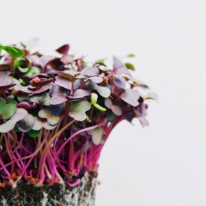 How to Grow Vegetables Indoors for Beginners: Sprouts & Microgreens