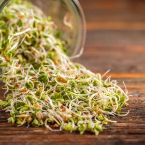 How to Grow Radish Sprouts in a Jar (In 5 Days!)