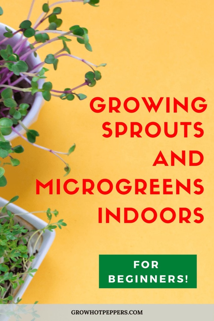 growing sprouts and microgreens indoors graphic