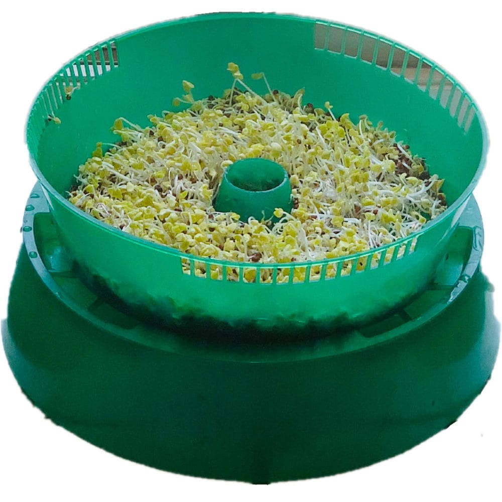 how to grow broccoli sprouts in trays