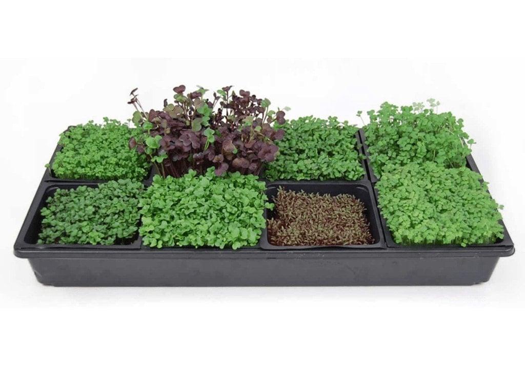 Sectional Microgreens Starter Kit on True Leaf Market