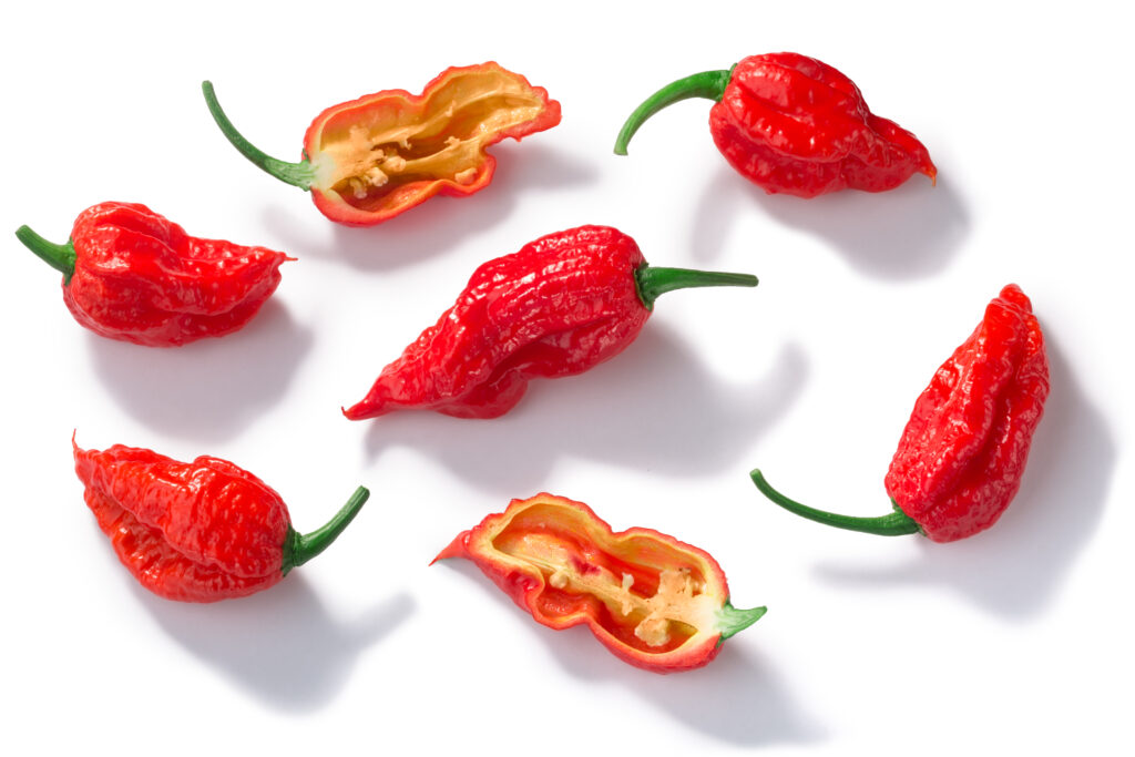 ghost peppers, bhut jolokia