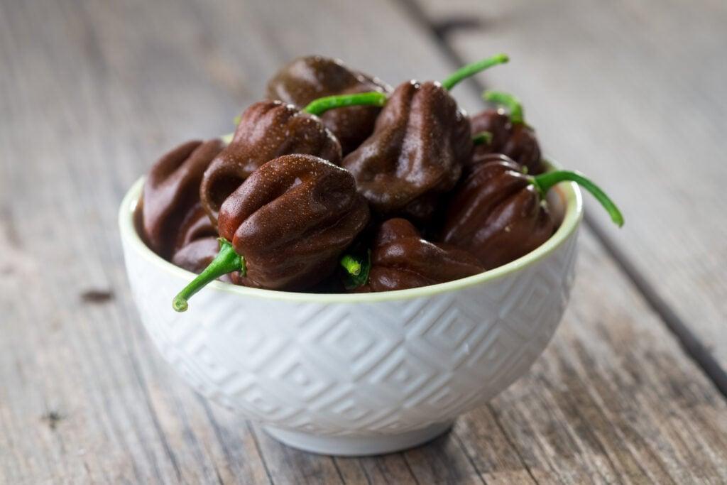 chocolate habanero bowl