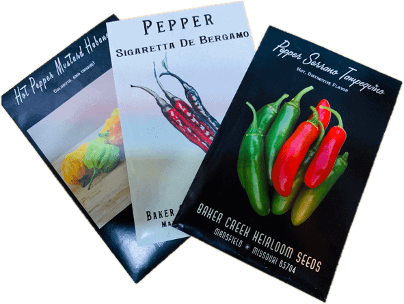 when to plant pepper seeds in seed packets