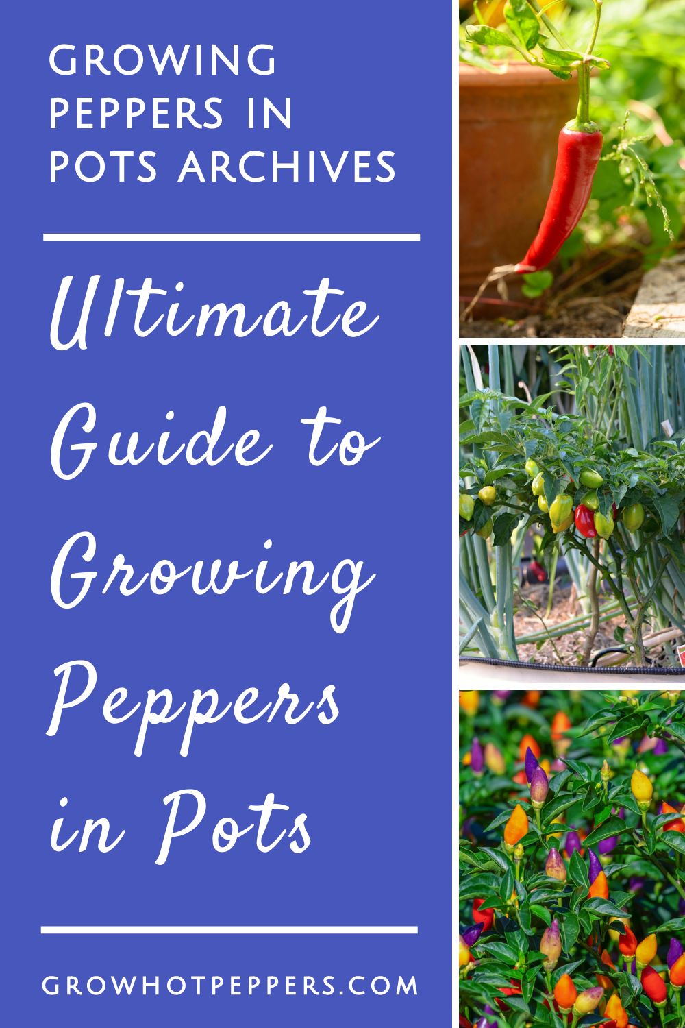Growing Peppers In Containers: Here\'s All You Need to Know
