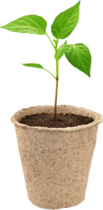 start pepper seeds with The Pepper Seed Starting Guide