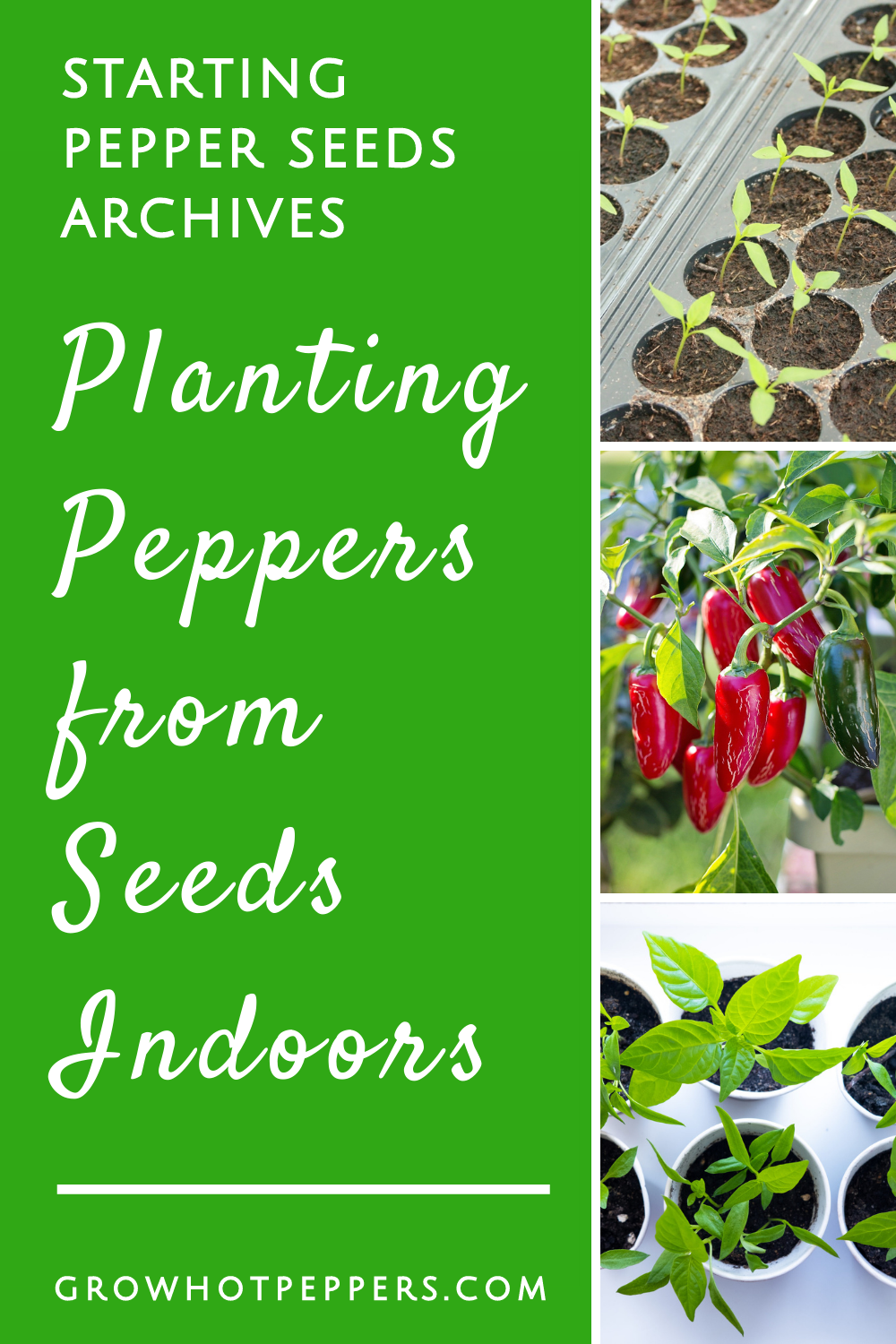 How to Get Pepper Seeds for Planting + Germinating Seeds Indoors