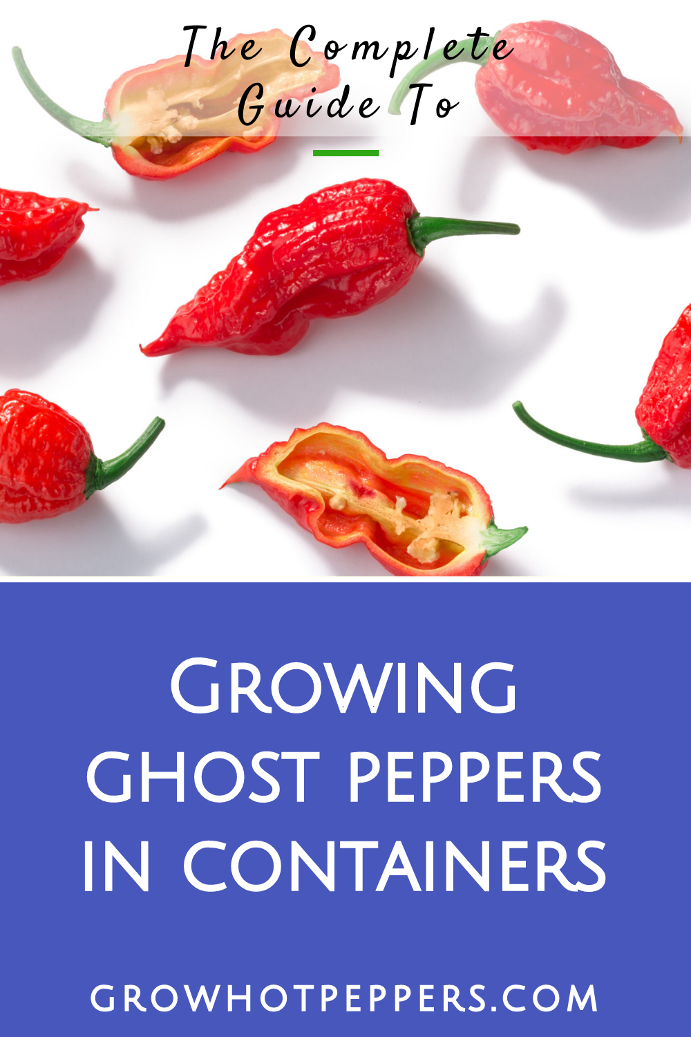 Ghost Pepper Plant Scoville, Colors and [Updated] Growing Guide