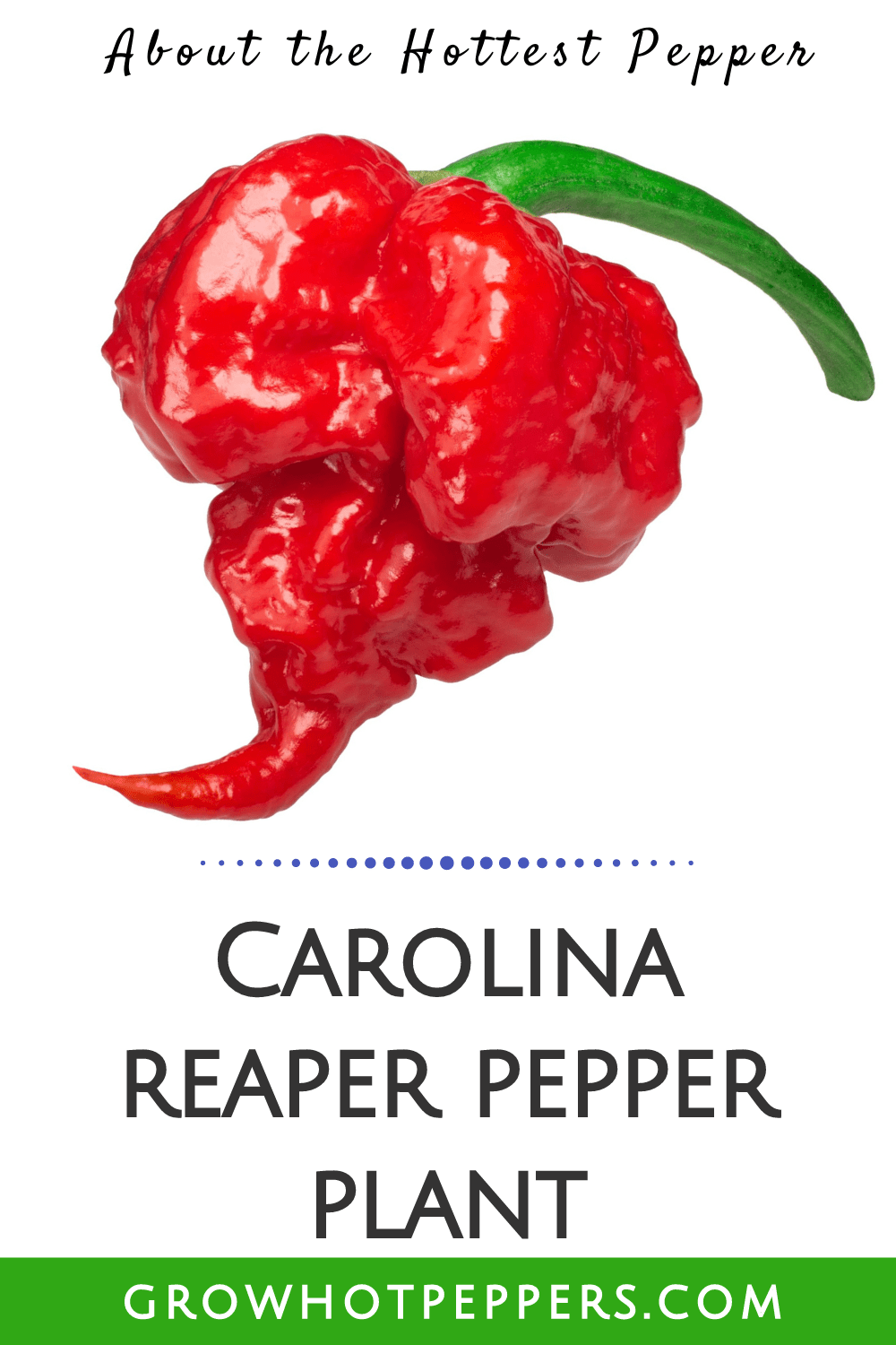 Carolina Reaper: All About the Hottest Pepper [+ Germination Video]