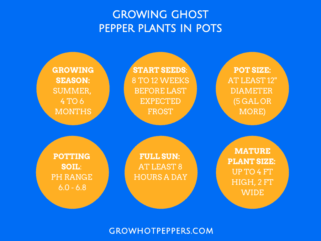 ghost pepper plant growing reference