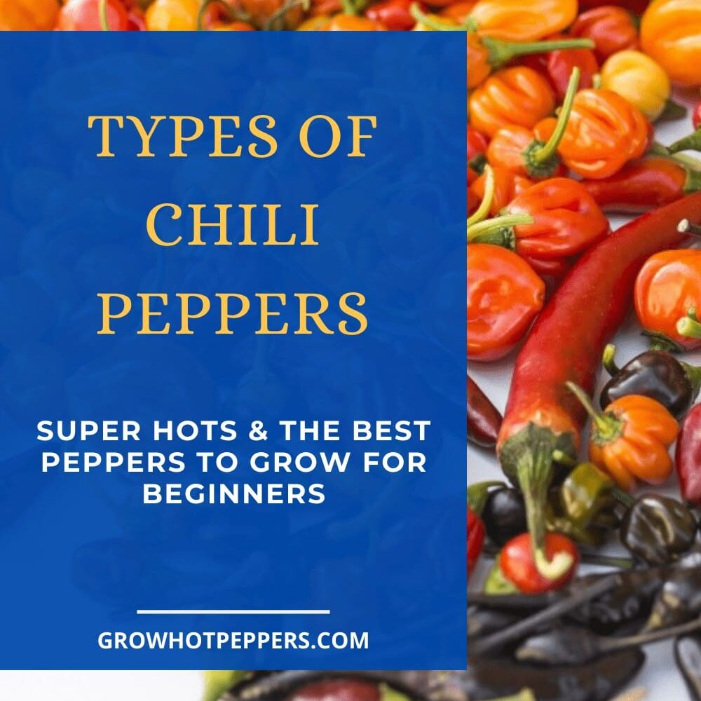 types of chili peppers pinterest graphic