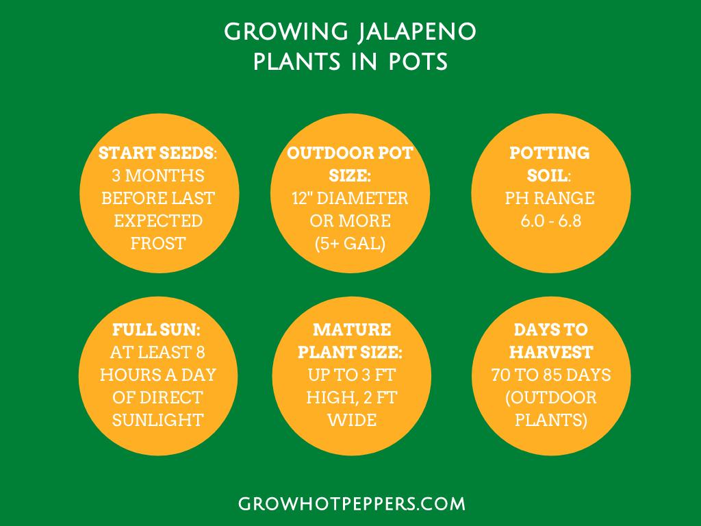 jalapeno plant grow chart