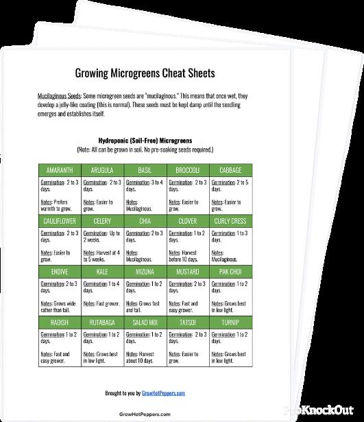 microgreens guide pdf