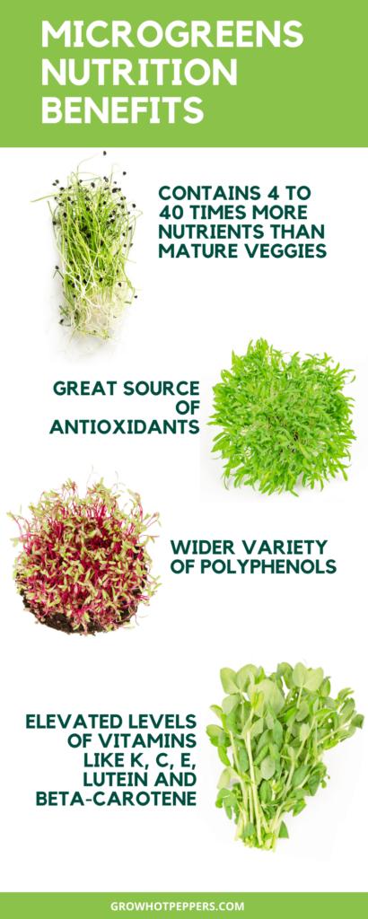 microgreens nutrition chart