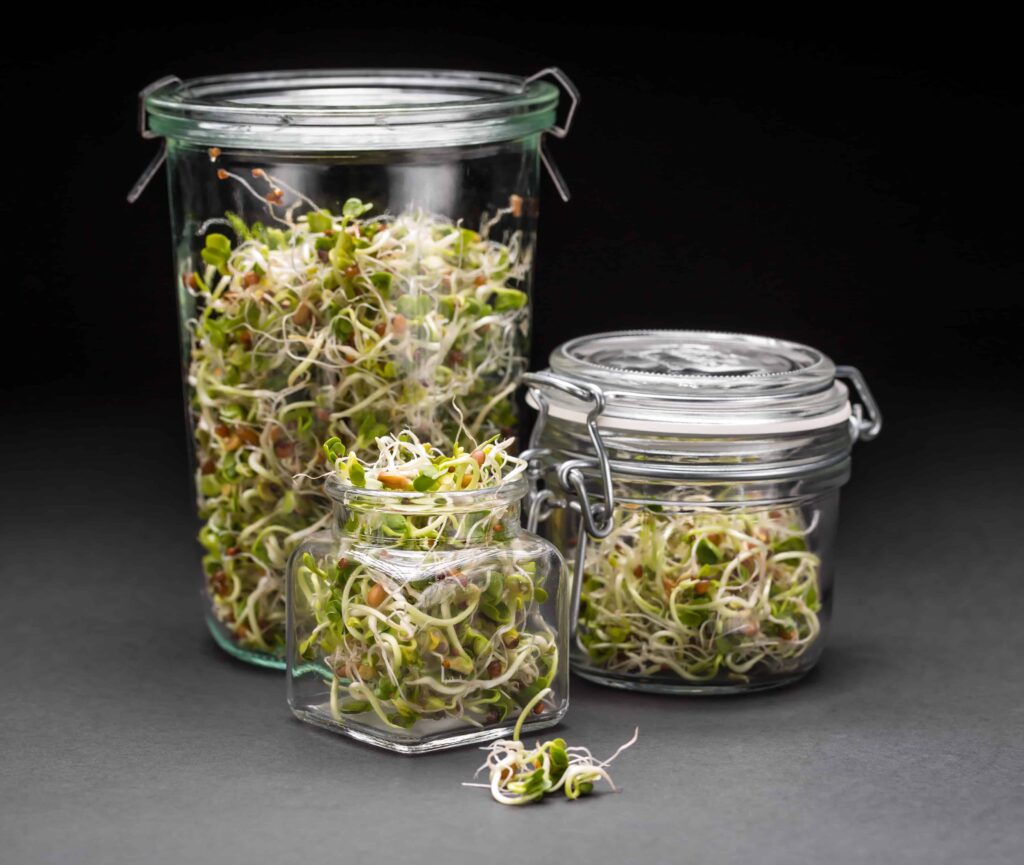 microgreens vs sprouts, radish sprouts in jars
