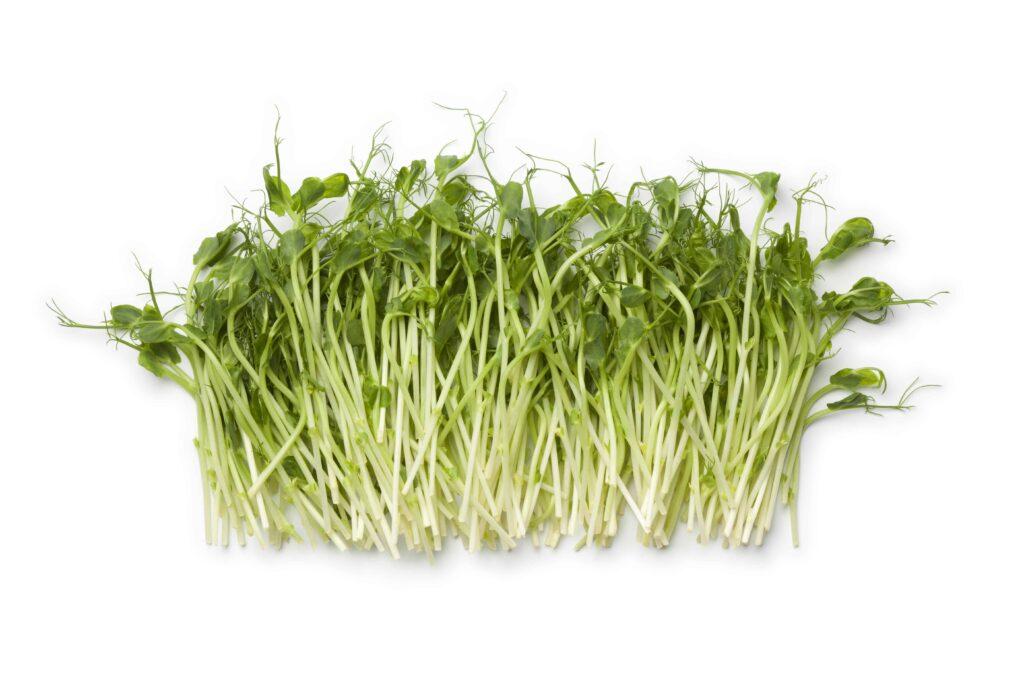 pea shoots microgreens