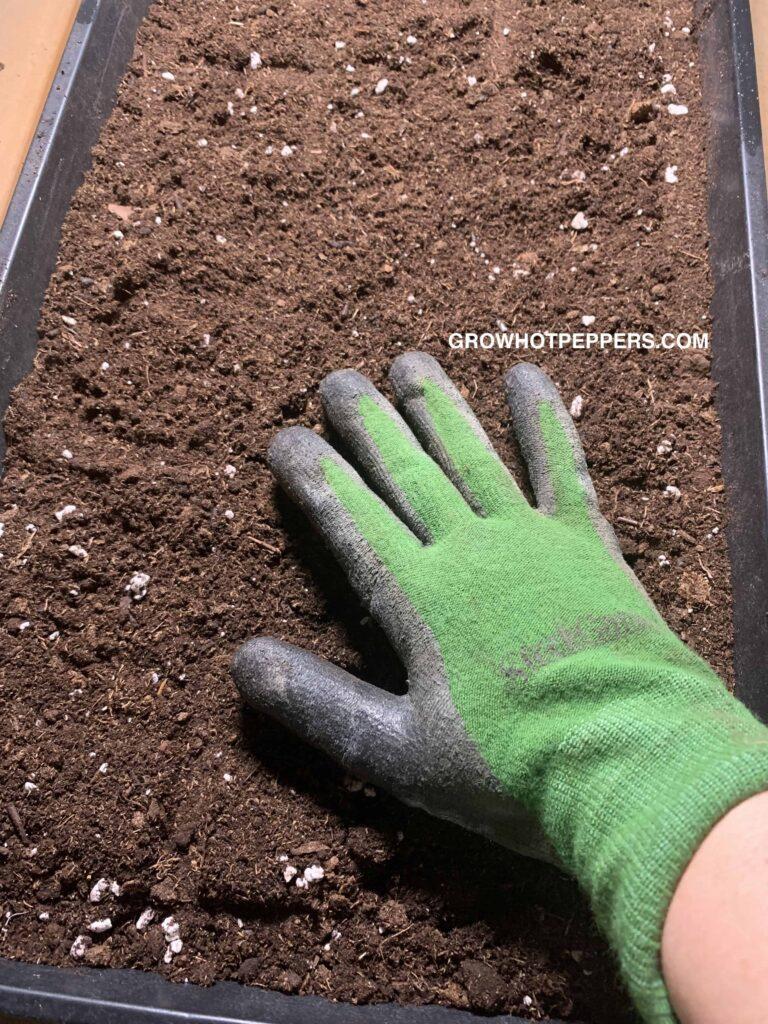 soil in grow tray
