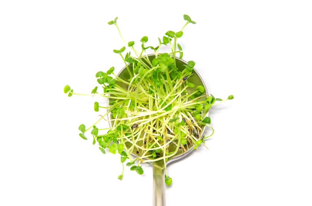 types of micro herbs, basil microgreens