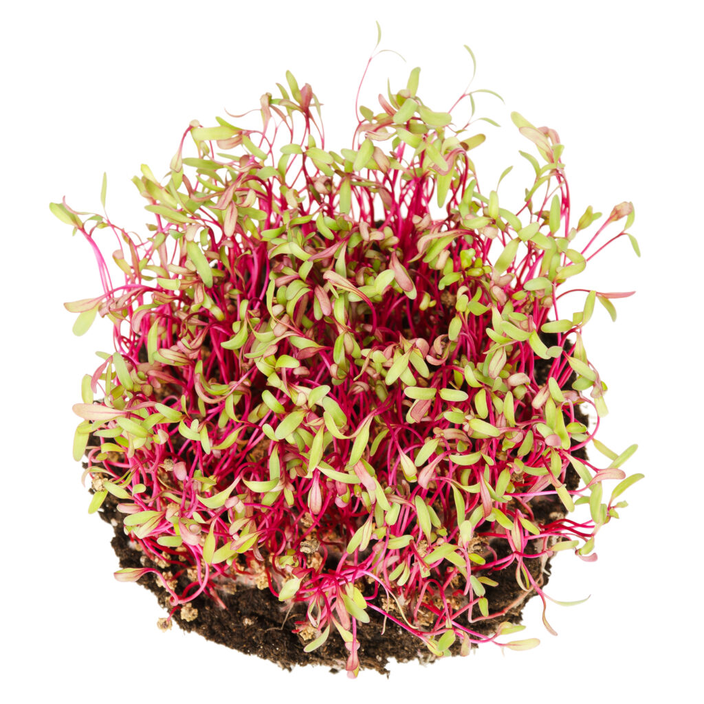 what exactly are microgreens, red beetroot