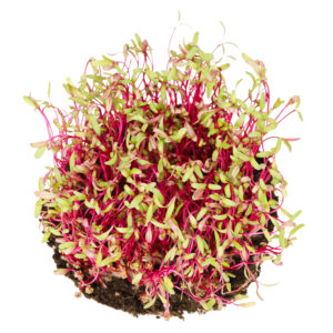 What Exactly Are Microgreens? (And, Why You Should Grow Them)
