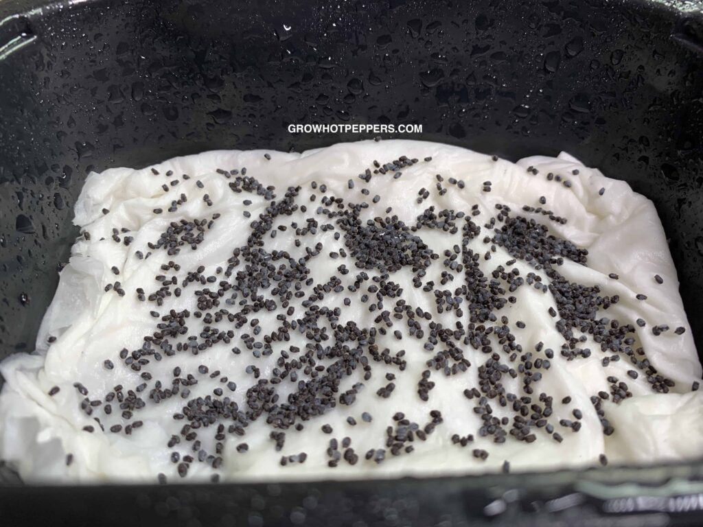 growing microgreens on paper towels