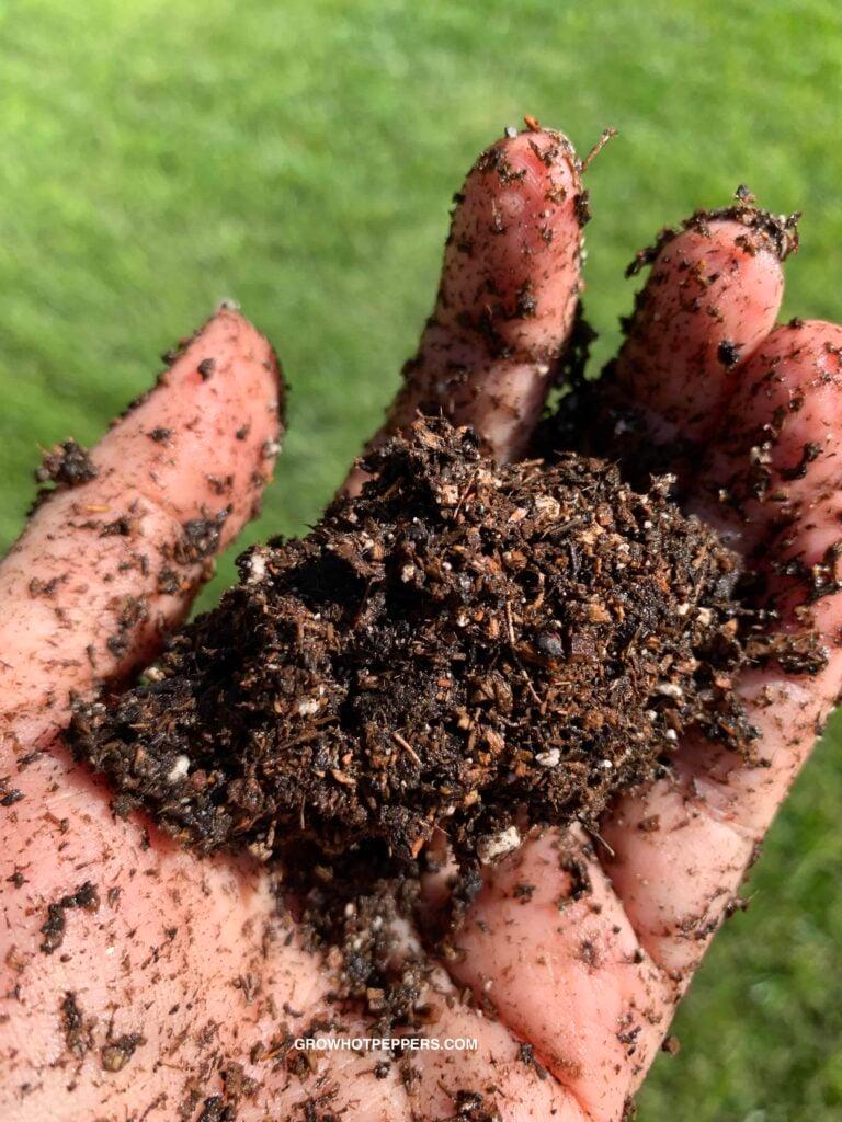 ball of potting soil