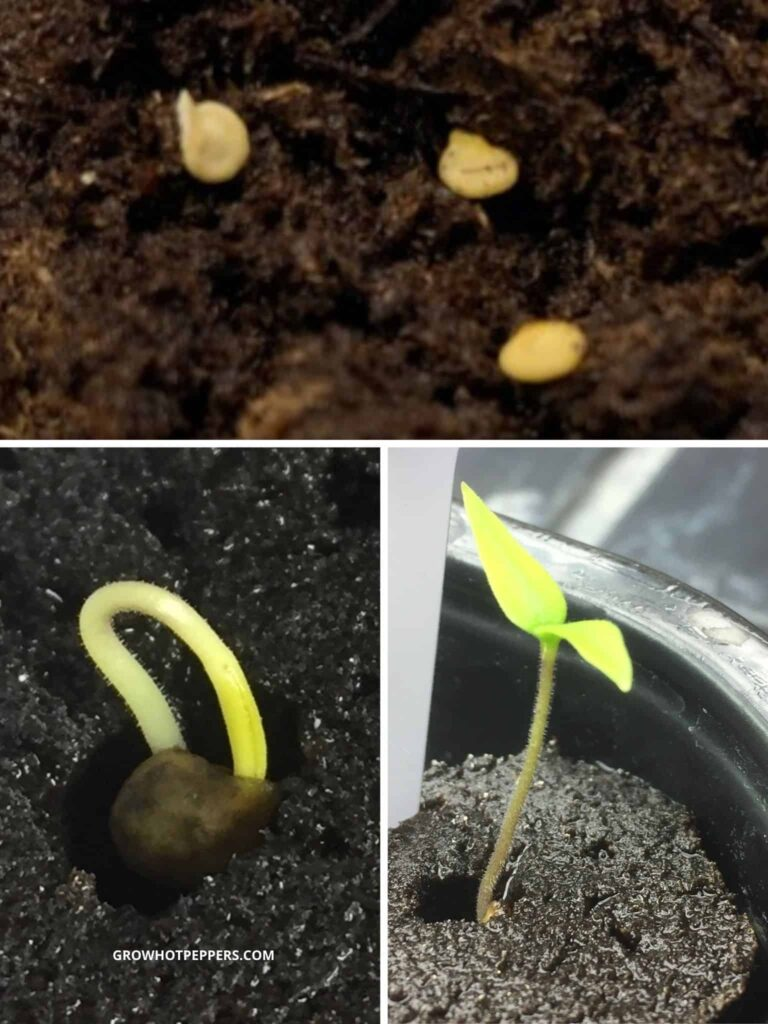 what to do after seeds sprout indoors