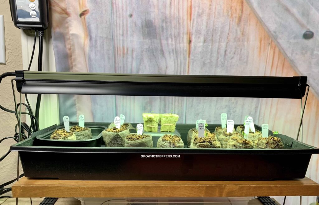 when to put light on germinated seeds