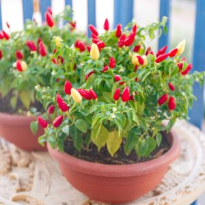Growing Peppers from Seed to Harvest – The Ultimate Guide