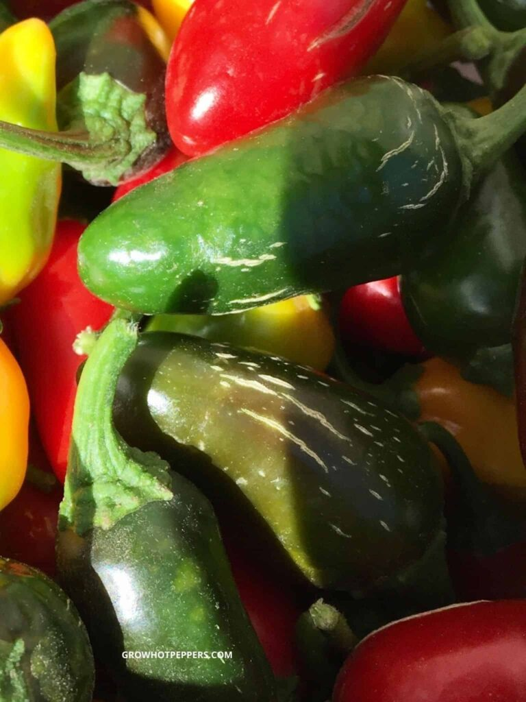 jalapeno peppers corking