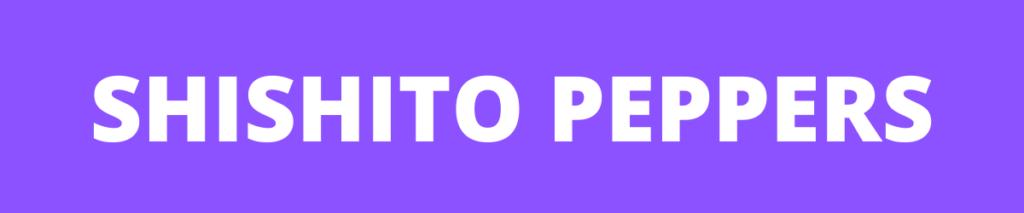 shishito pepper banner
