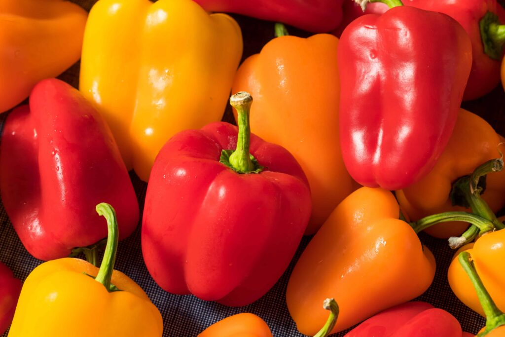 when are mini sweet peppers ready to pick