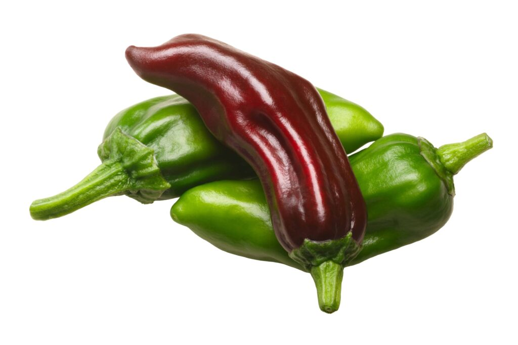when to pick pepperoncini peppers