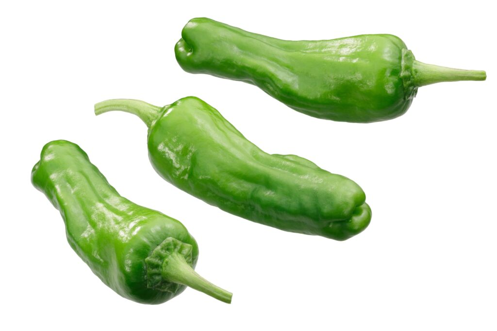 when to pick shishito peppers